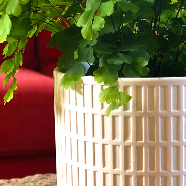 Detail of Modern white cylinder planter with grid pattern embossed.