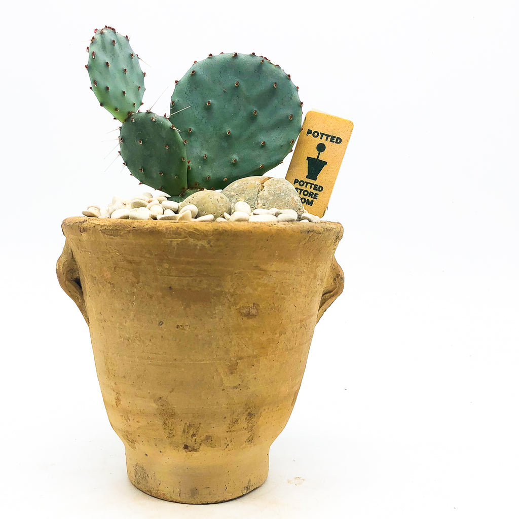 Terra-cotta Egyptian planter with a cactus