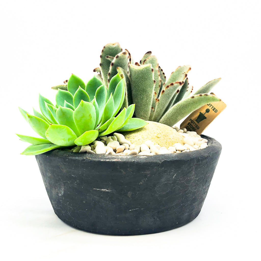 Black circular planter with assorted succulents