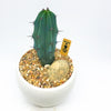 White Paris Pot with a cactus