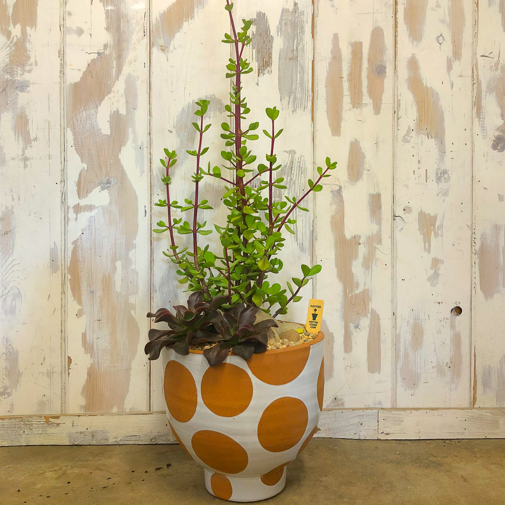 Terra-cotta Footed White Glaze Dot Pot with assorted succulents
