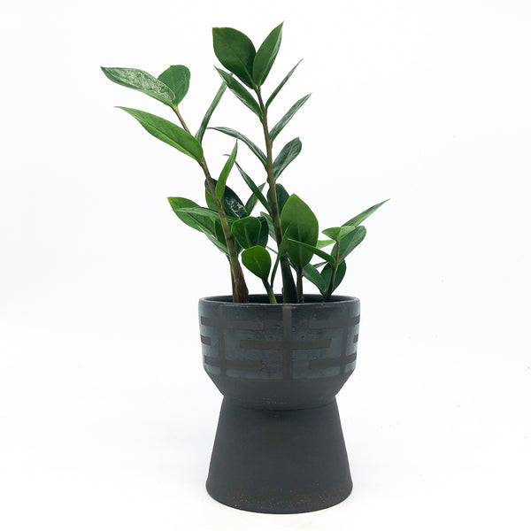 Bkb Ceramics - Black Chalice with ZZ plant