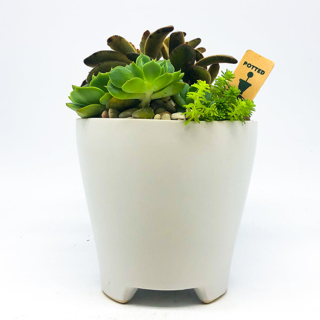 White Ruth Pot with assorted succulents