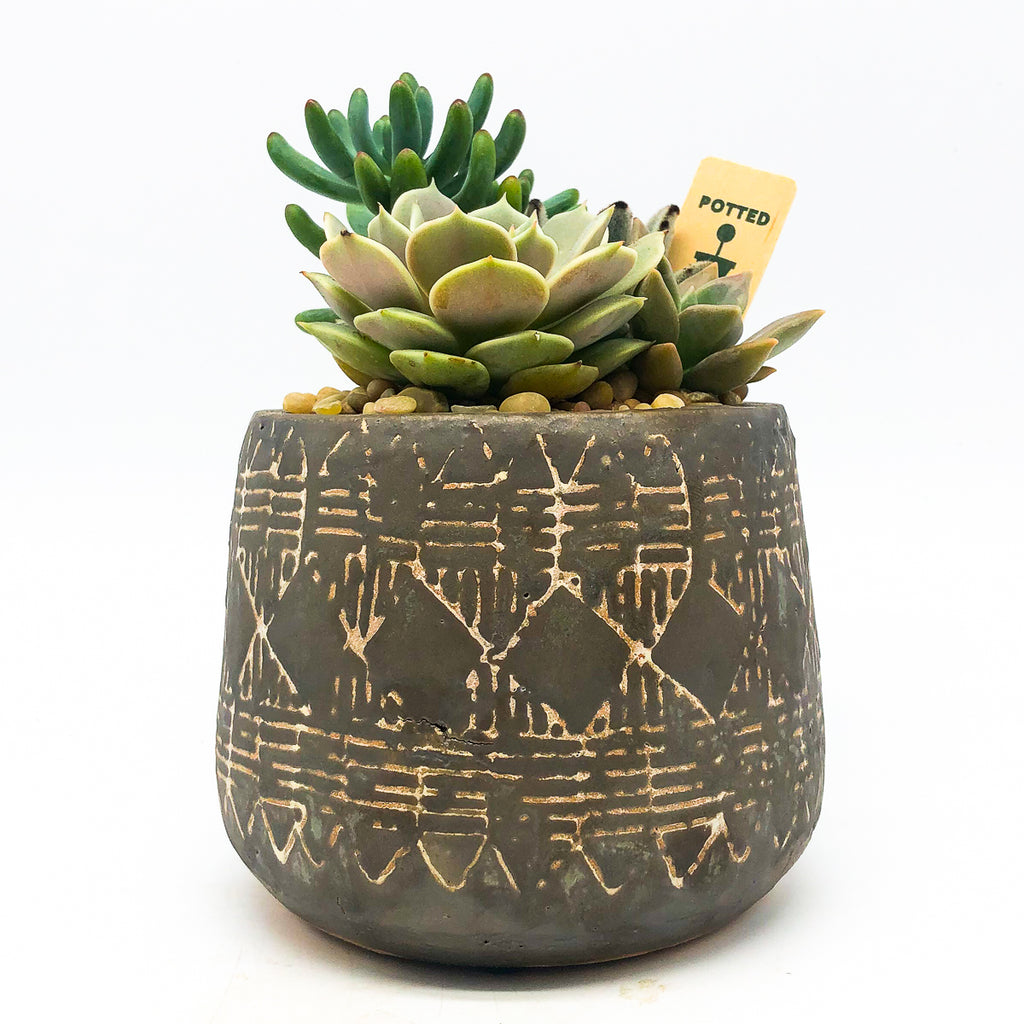 Naima Pot with assorted succulents