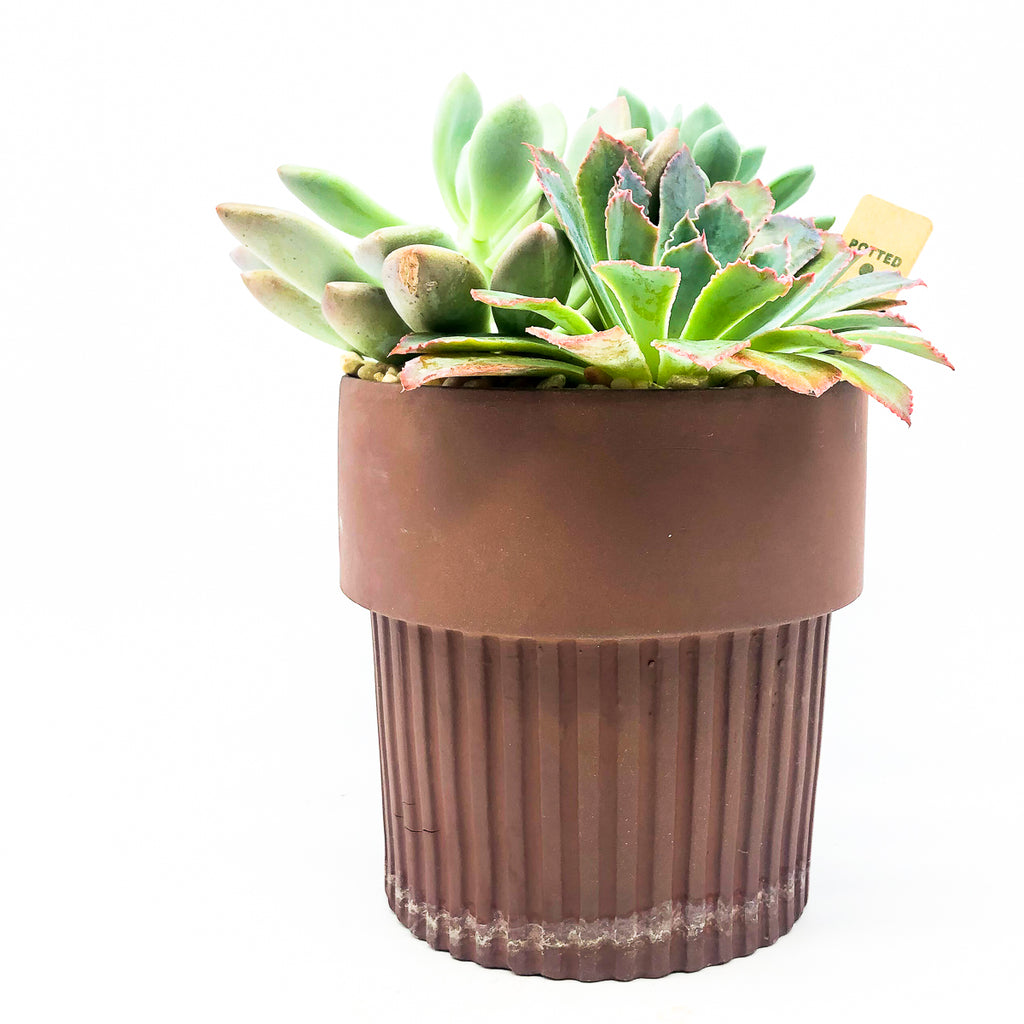 Ribbed Clay Pot with assorted succulents