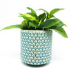 Aqua Pot with golden pothos