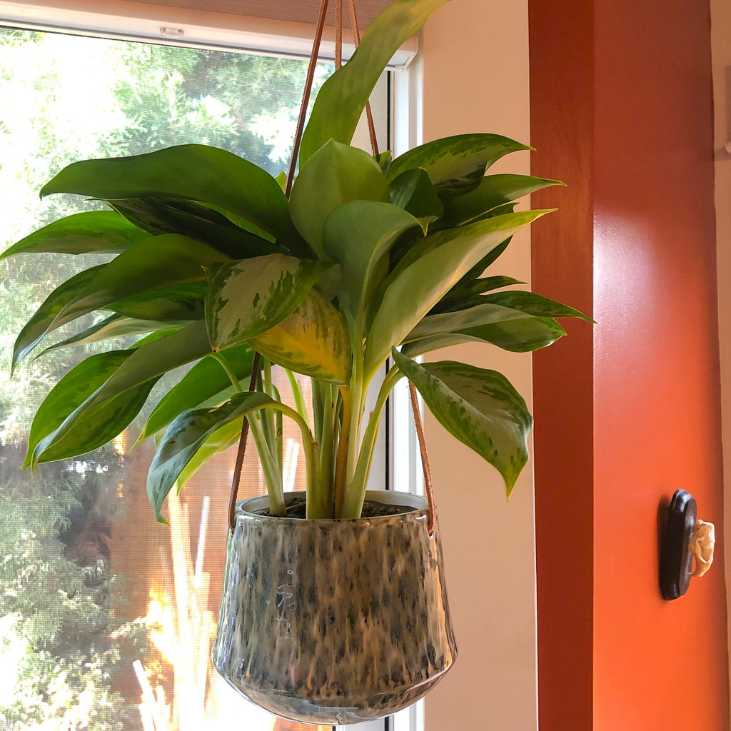Hanging Marbled Planter with a silver bay
