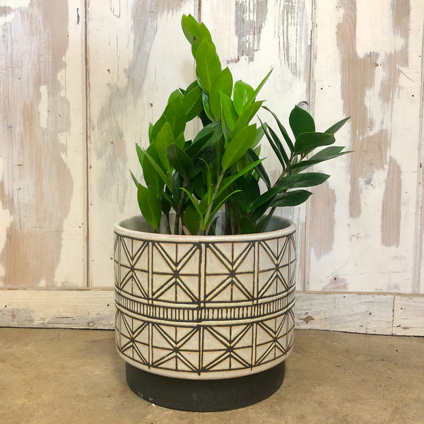 Beige Glazed Tribal Pot with ZZ plant