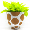 Terra-cotta Footed White Glaze Dot Pot with a neon pothos