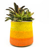 Double M - Wide Multi Stripe in Orange/Yellow with assorted succulents