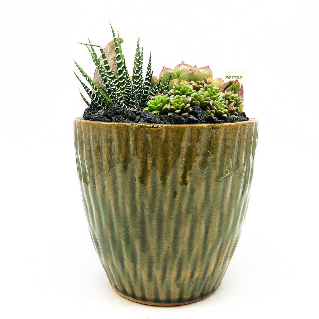 Green glazed planter with assorted succulents