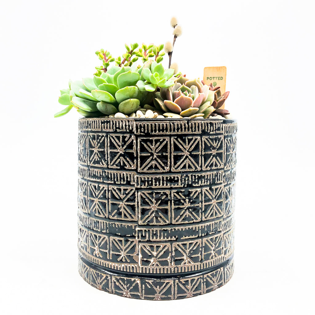 Cusco Cache Pot with assorted succulents