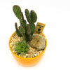 Orange planter with assorted cacti and succulents