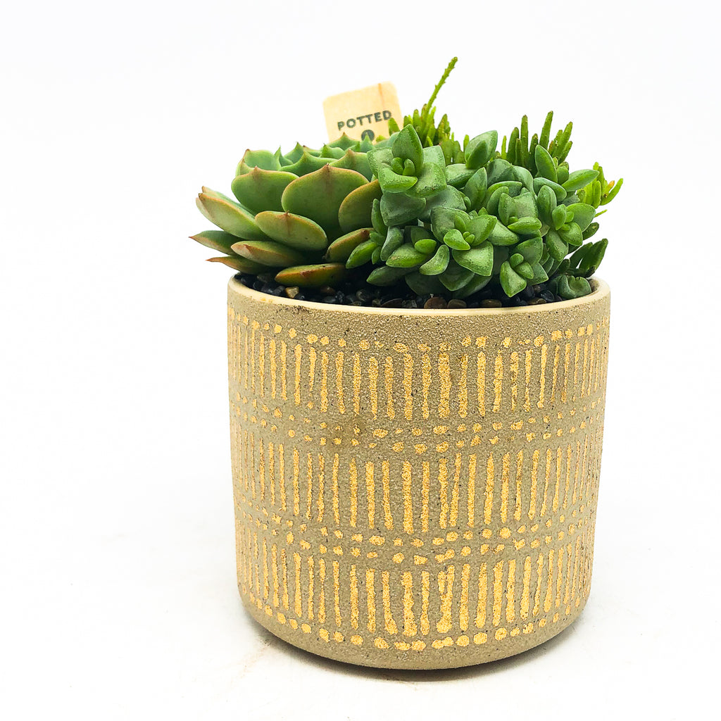 Gold Stamped Pot with assorted succulents
