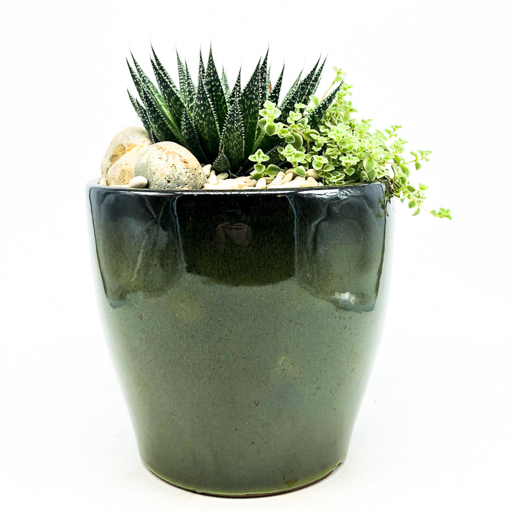 Dark green glazed planter with assorted succulents