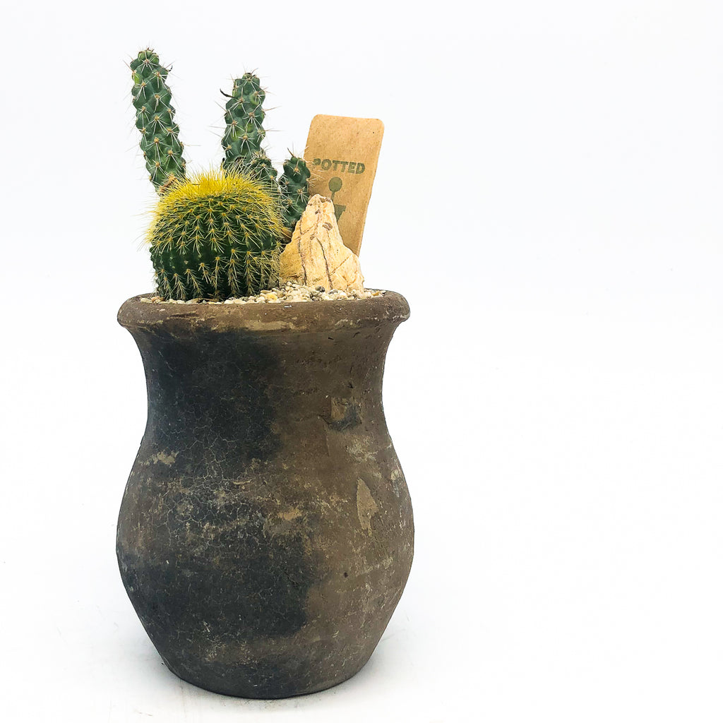 Black Egyptian Planter with assorted cacti