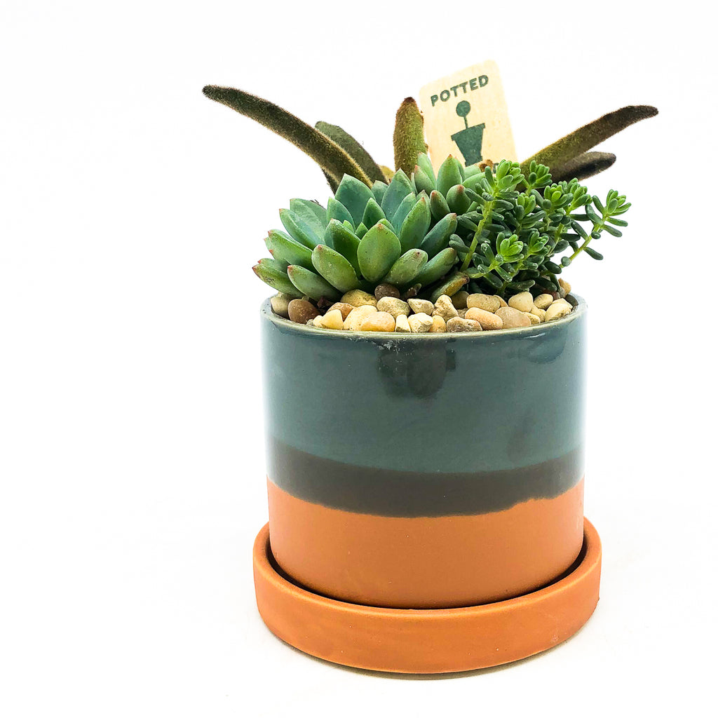Chive Minute planter in blue/terra-cotta with saucer and assorted succulents