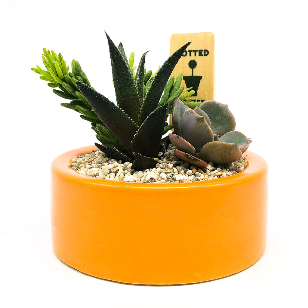Orange circular planter with assorted succulents