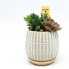 Ramos Linear pot with saucer and assorted succulents