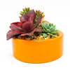 Glazed orange planter with assorted succulents
