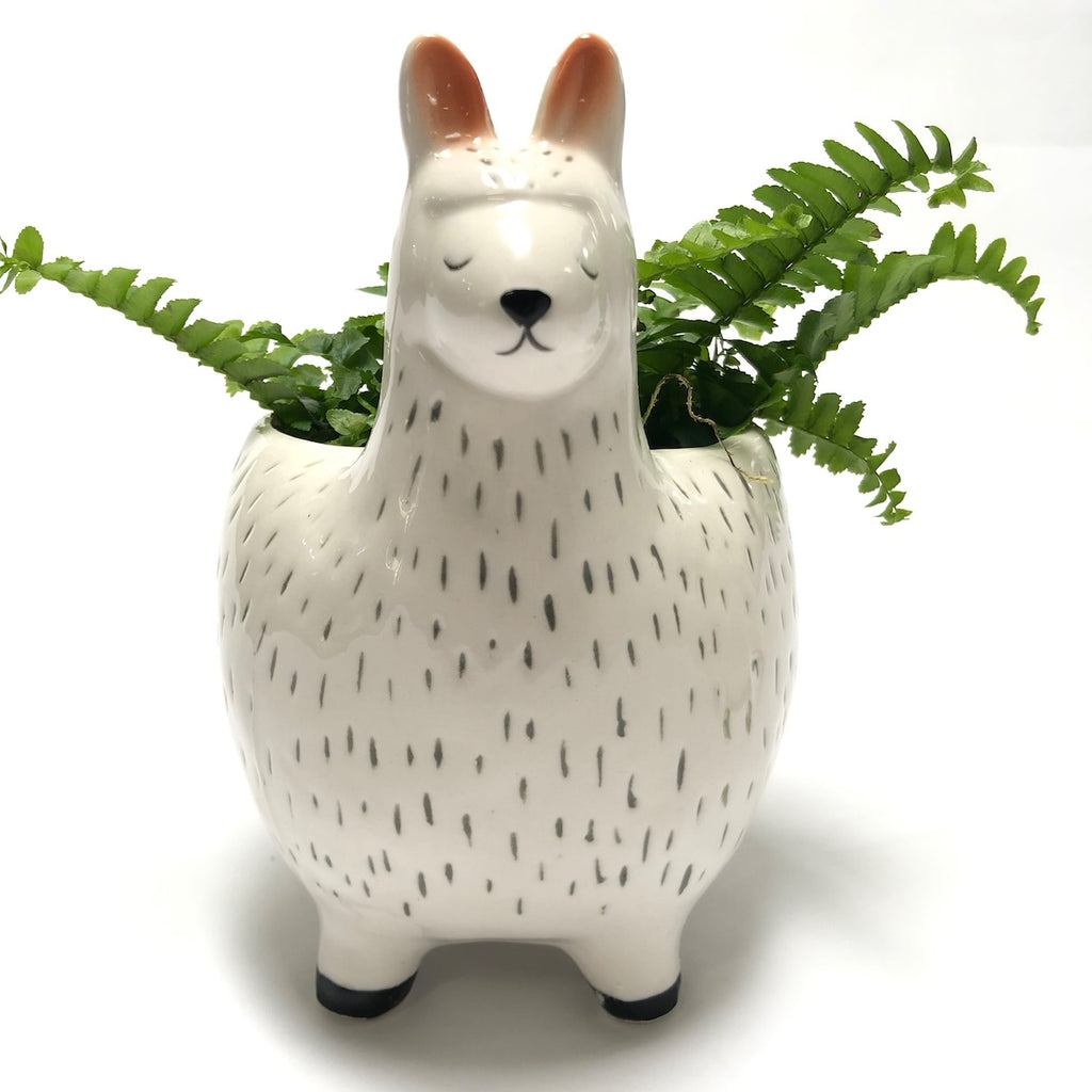 Front view Large llama character planter.