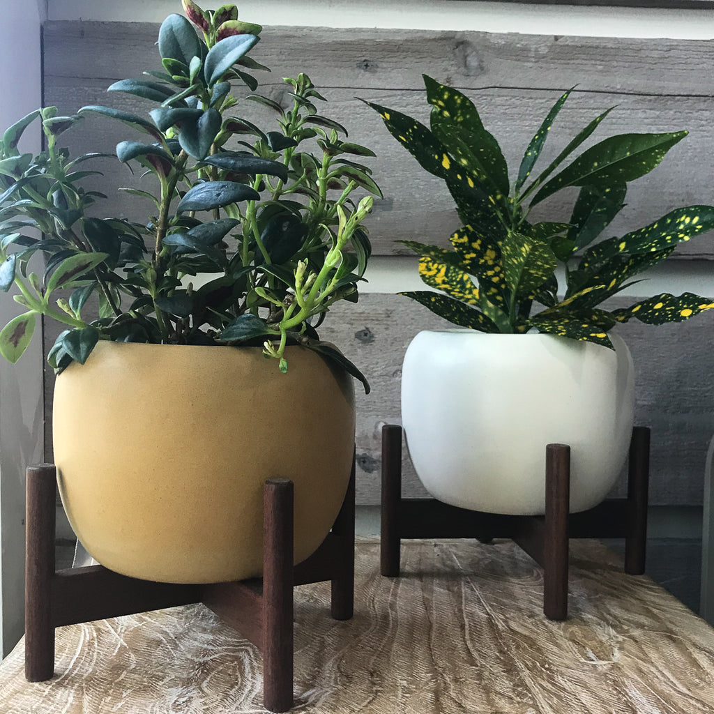 White and Mustard Modernica Case Study Drum Planters with stand