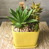 Yellow square planter with saucer