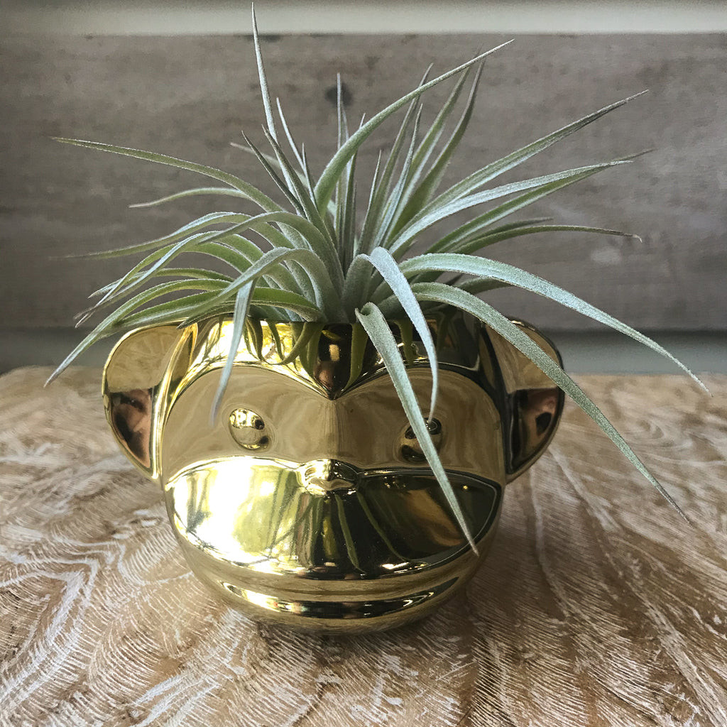 Funky Monkey Planter