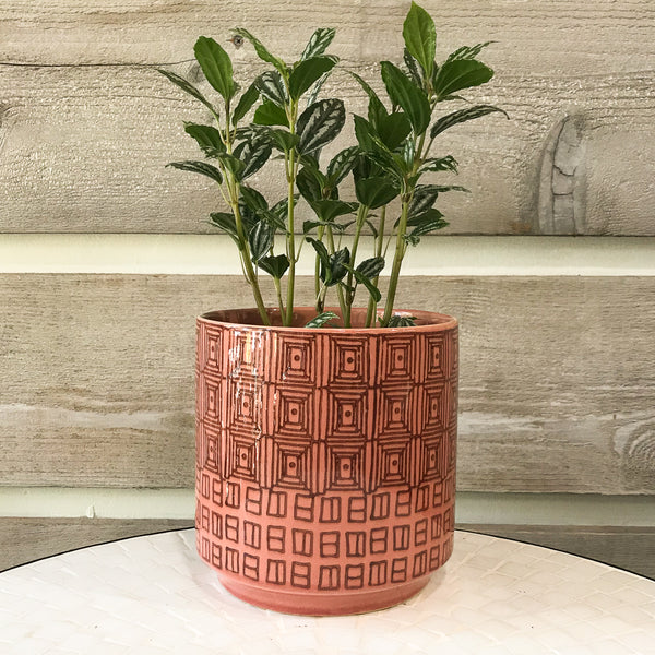 Pepe Pink Tribal Cylinder with plant