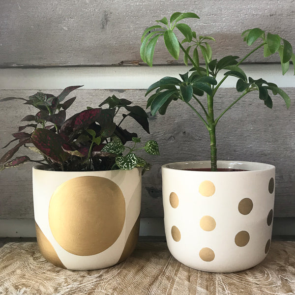 White and gold dot planters
