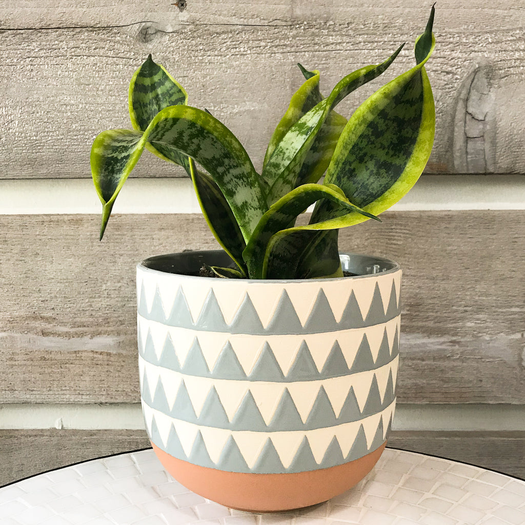 Sully blue Triangle Pot
