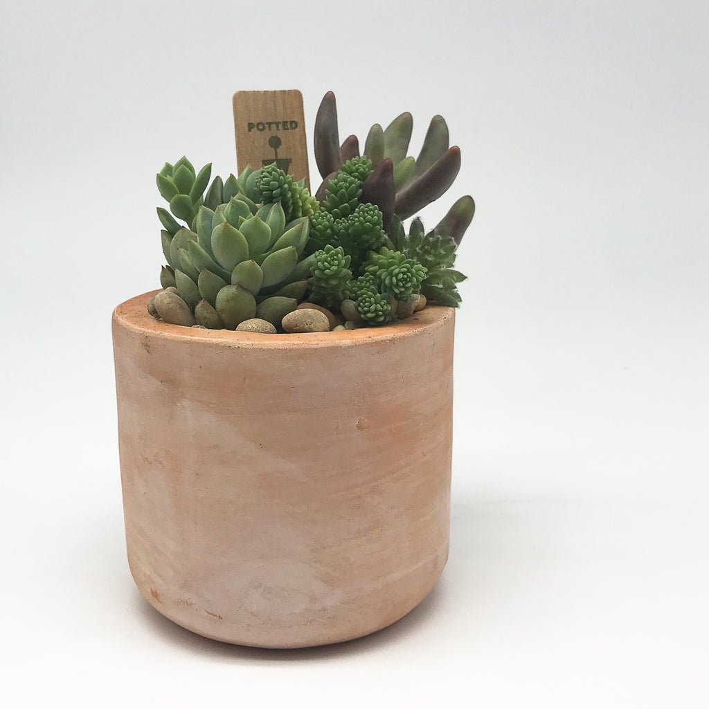 Terracotta planter with assorted succulents