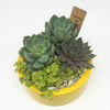 Medium yellow planter with assorted succulents