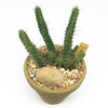 Medium terracotta planter with some cacti
