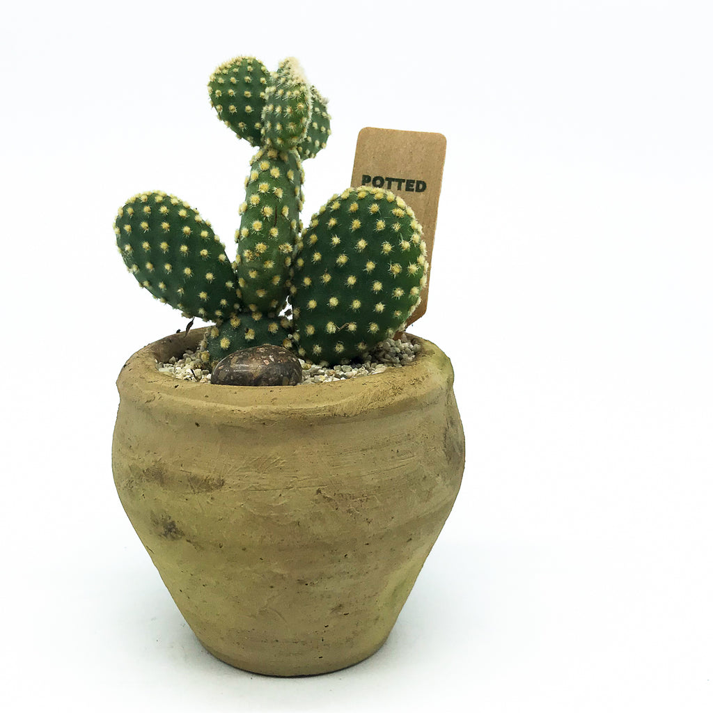 Small Egyptian Pot with a cactus