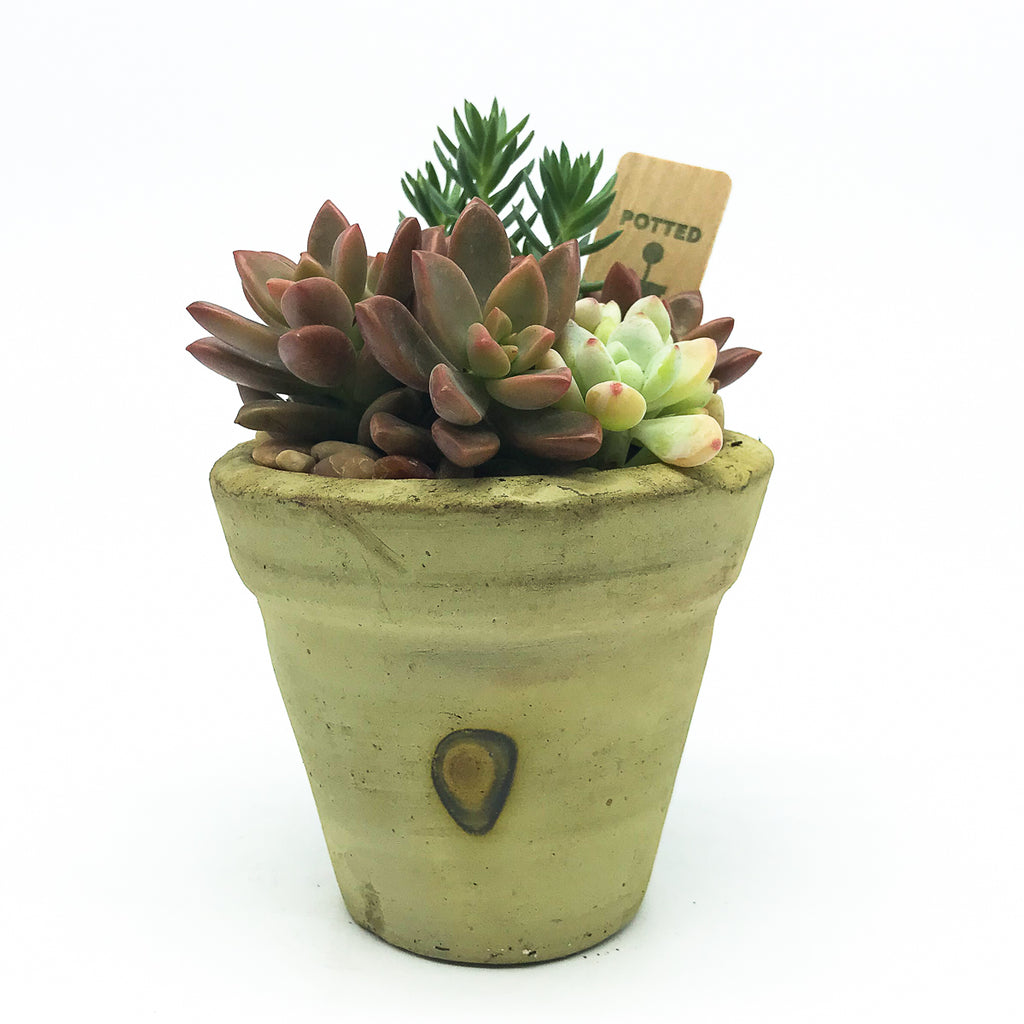 Medium Egyptian Pot with assorted succulents