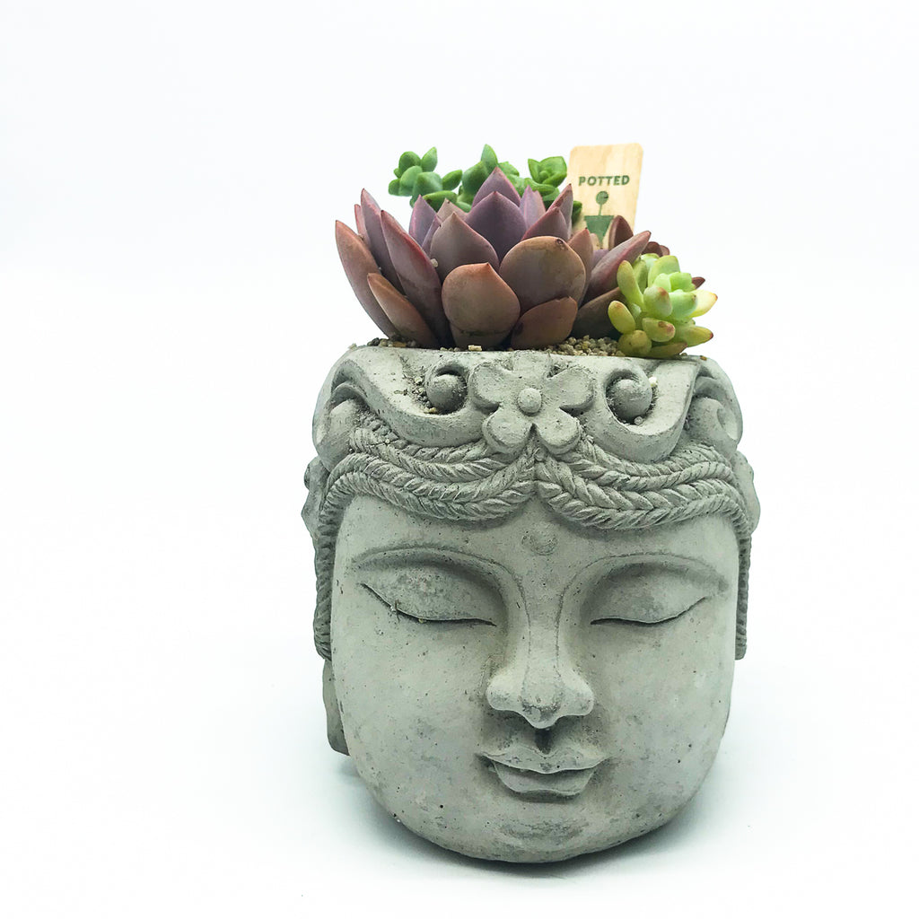 Buddha planter with assorted succulents