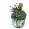 Westview Little Strokes Pot with assorted succulents