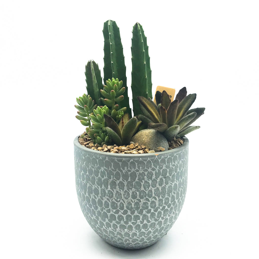 Blue/Grey pot with assorted succulents