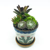 Nopal Short Pot with assorted succulents