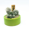 Small green planter with assorted succulents