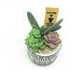 Mini Freja Pot with assorted succulents