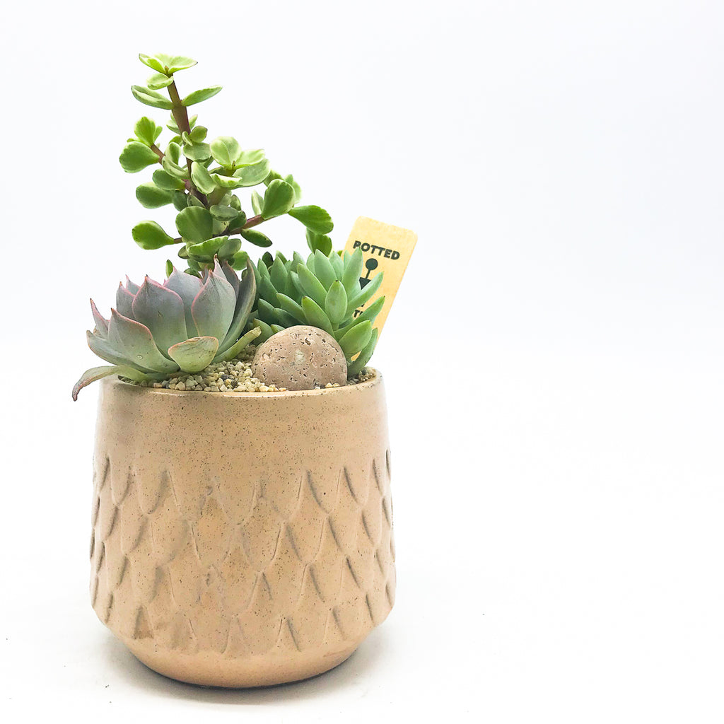 Mermaid Pot with assorted succulents
