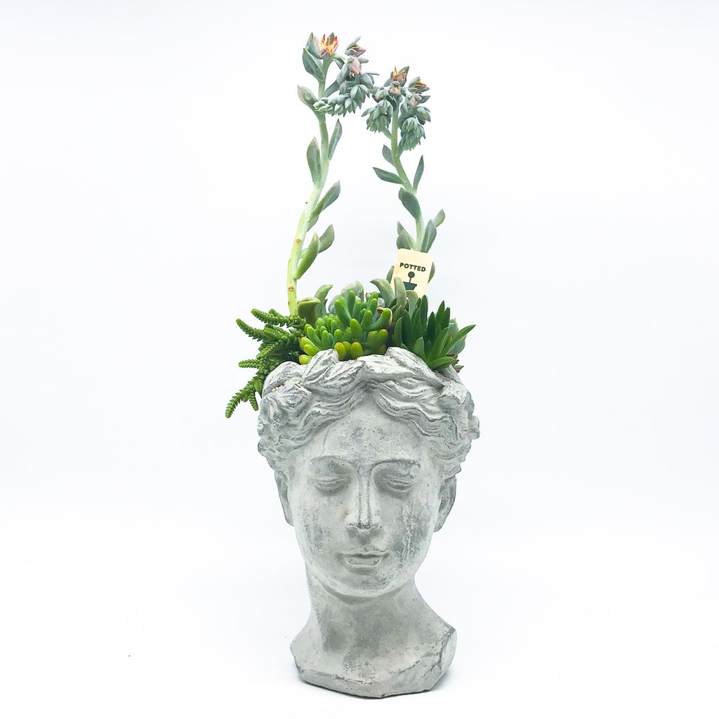 Roman Head Planter with assorted succulents