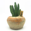 Terracotta Egyptian planter with a cactus