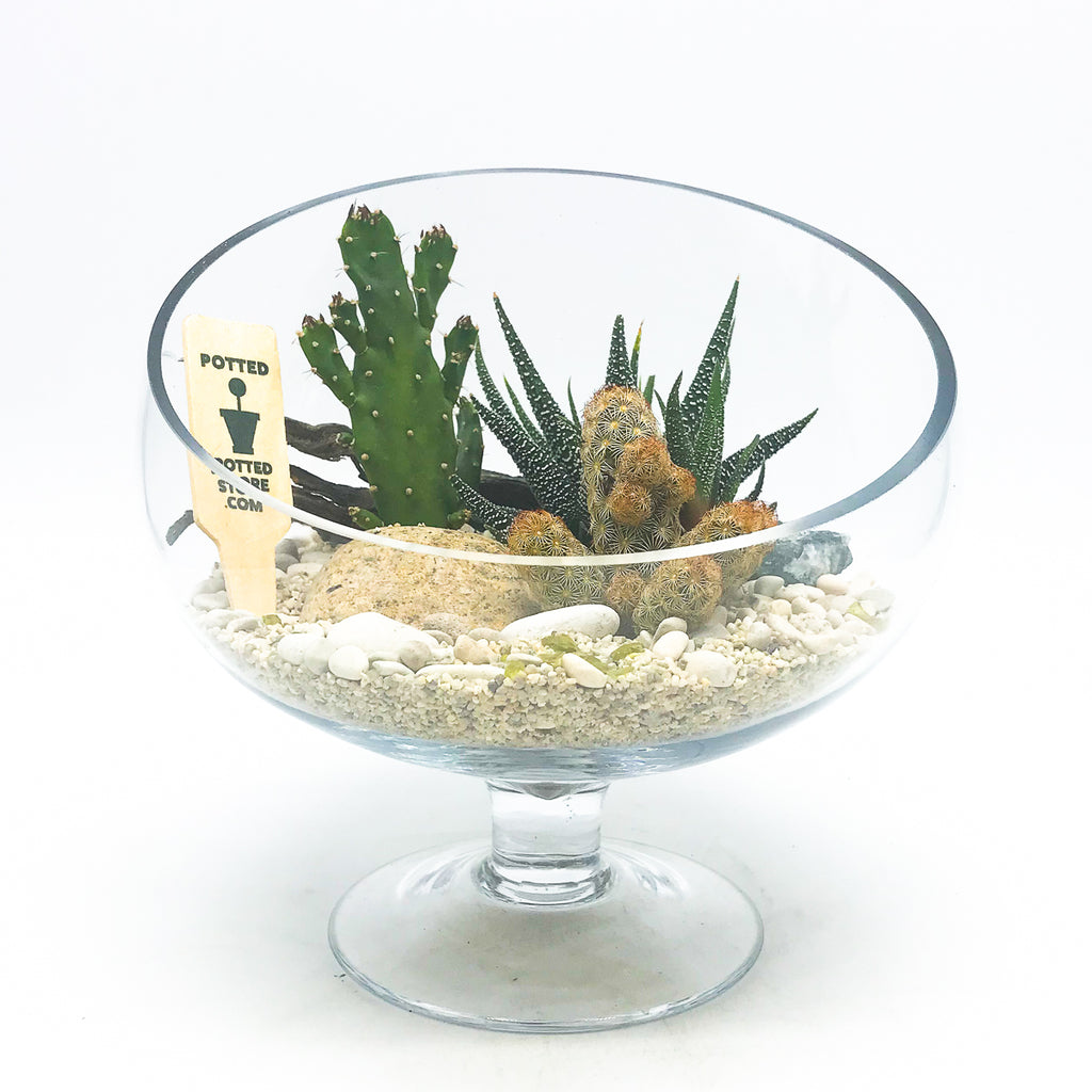 Round terrarium with assorted succulents