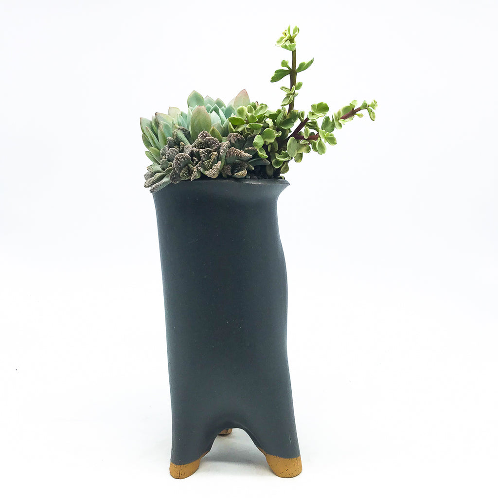 Gimbell Tall Trunk Planter in Graphite with assorted succulents
