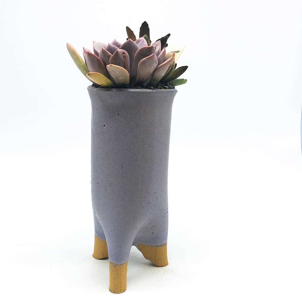 Gimbell Tall Trunk Planter in Violet with assorted succulents