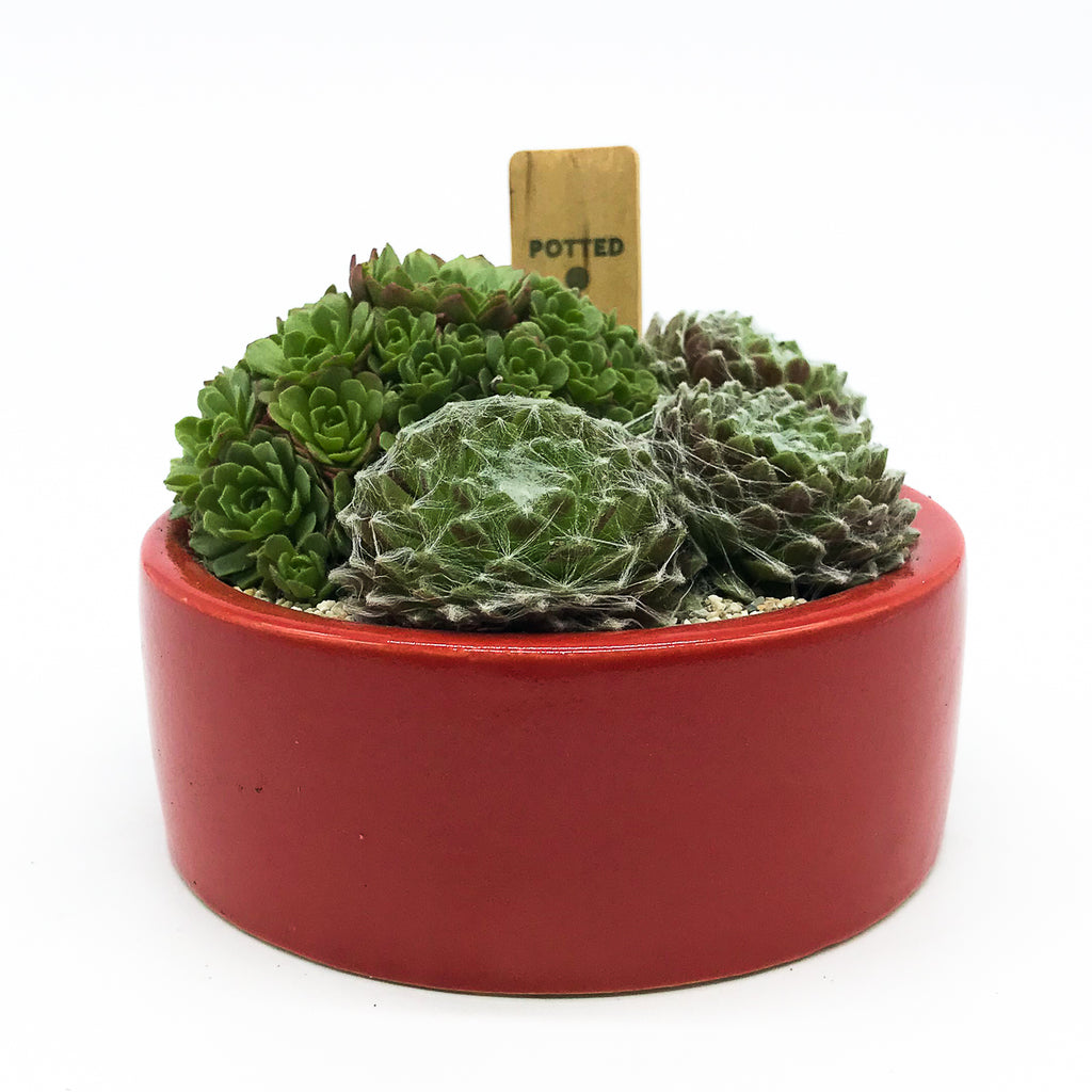 Red planter with assorted succulents