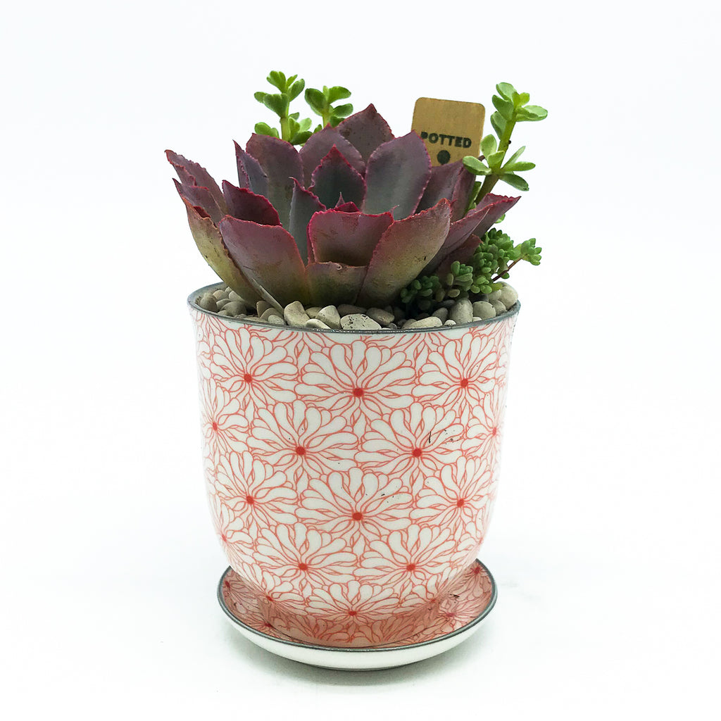 Big Liberte Pot with assorted succulents